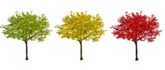 метод дерево решений